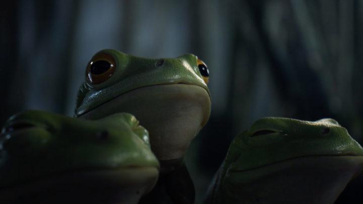 mc donald's - frog
